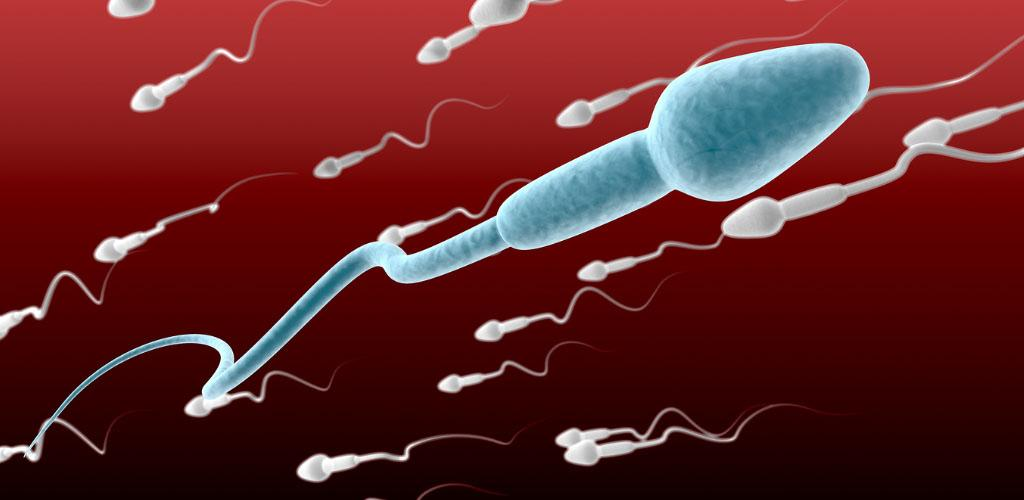 Male sub-fertility or infertility? Semen analysis – explained.